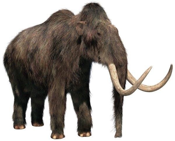 Skály U mamuta
